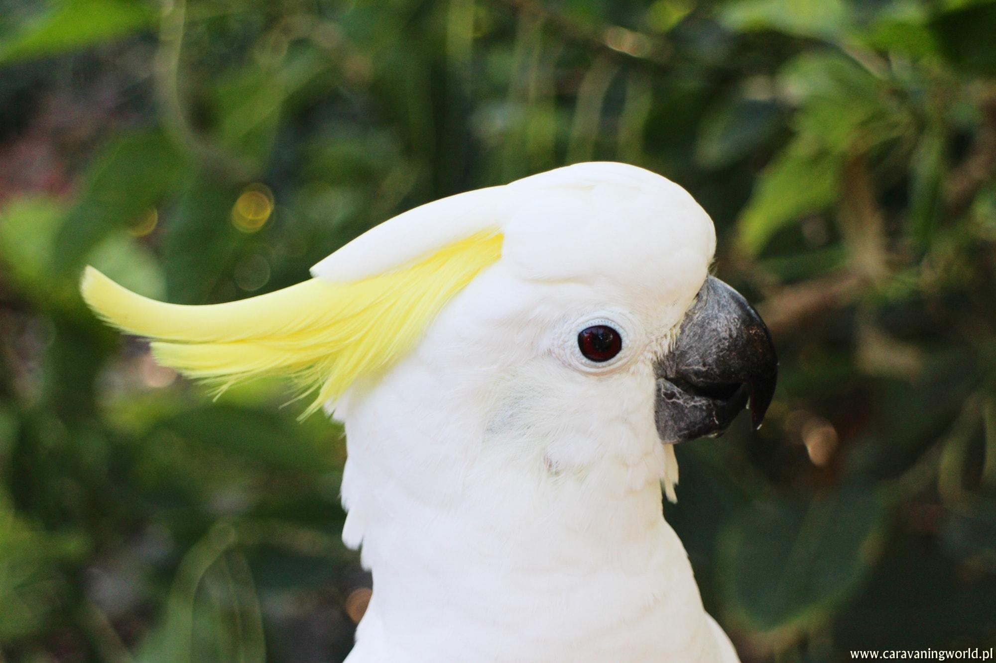 Loro Parque – papugowe szaleństwo w cieniu del Teide