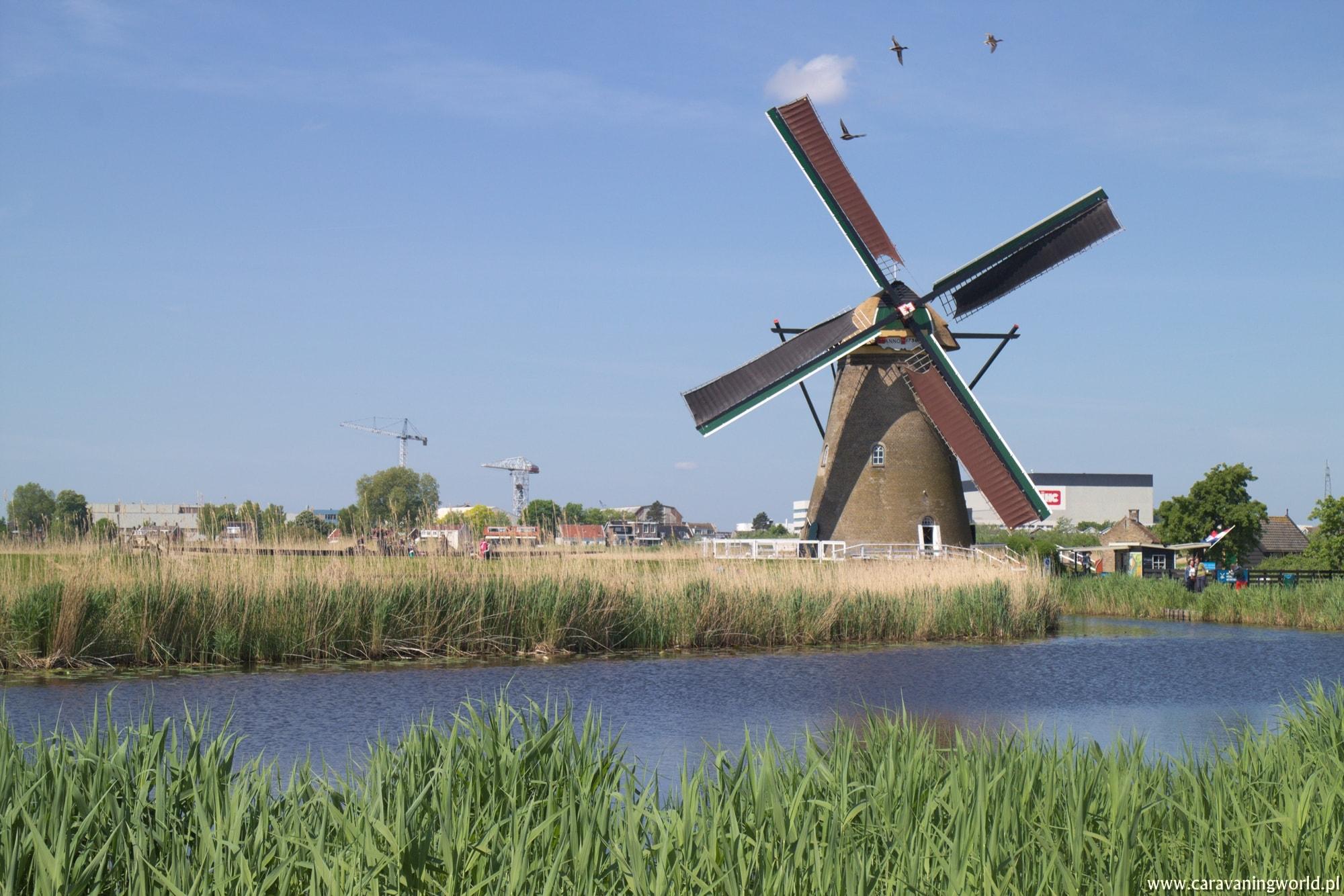Majówka w Holandii
