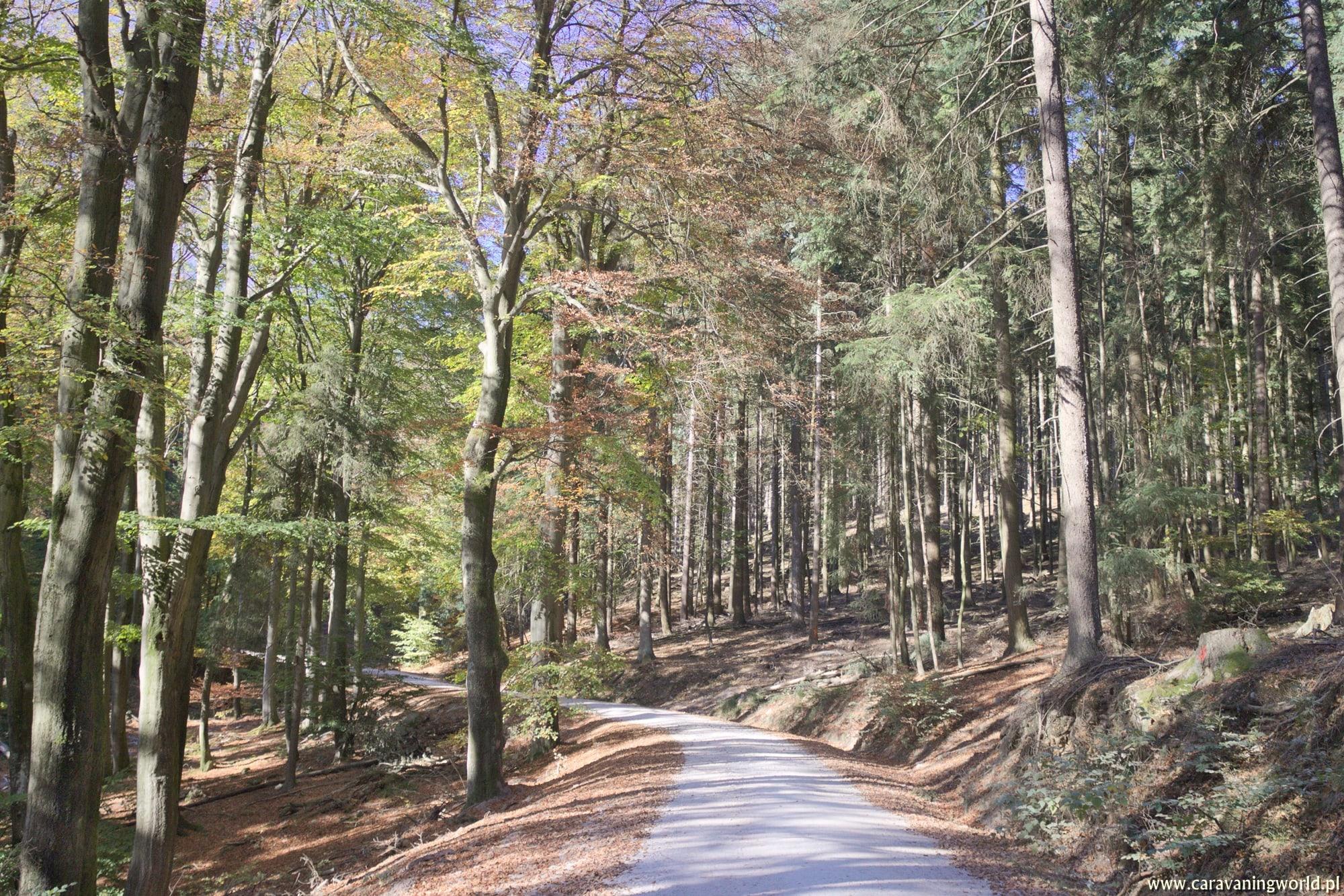 Jesień w górach Taunus