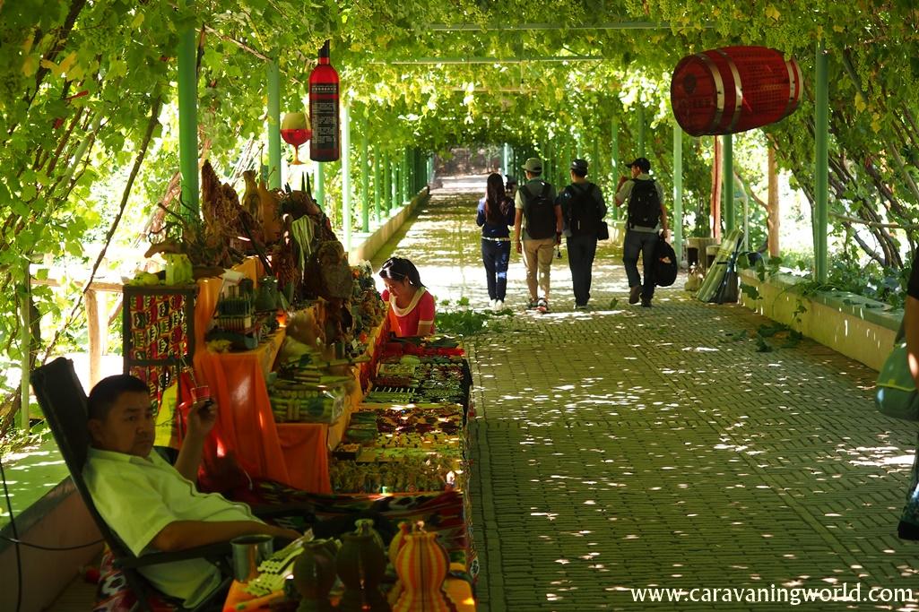 Winnice w Turfanie