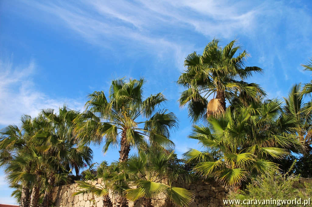 Wszędzie palmy