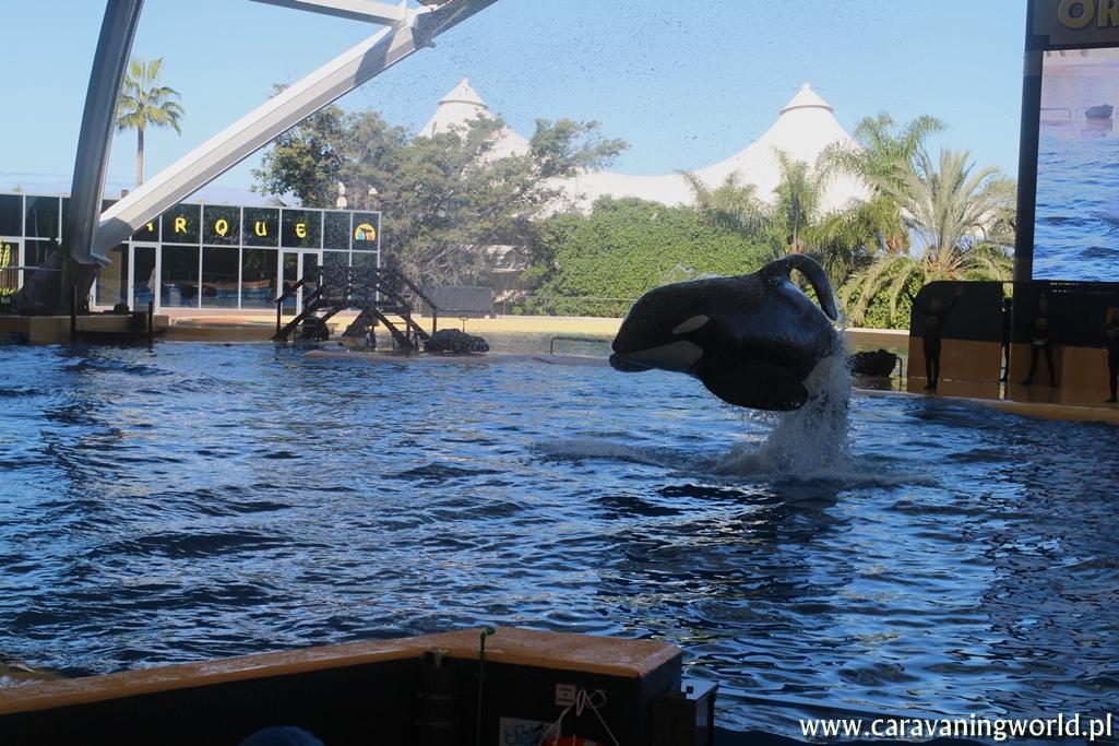 Skacząca orka w Loro Parque