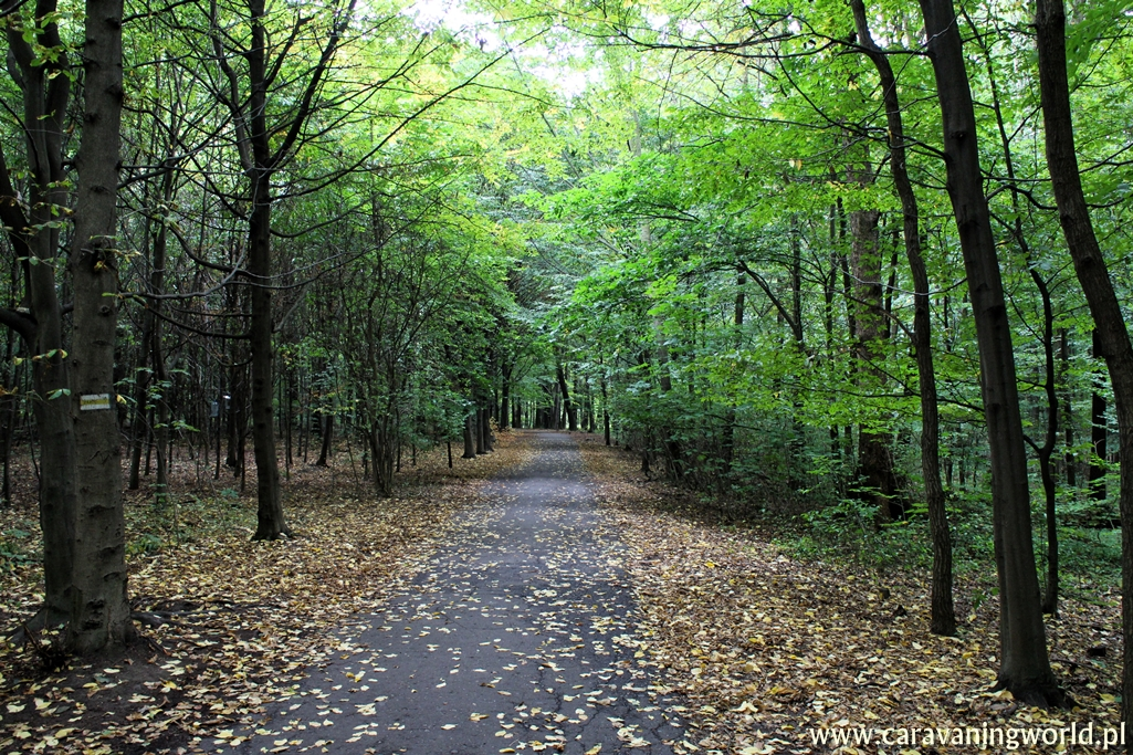 Alejka Parku Repeckiego w Tarnowskich Górach