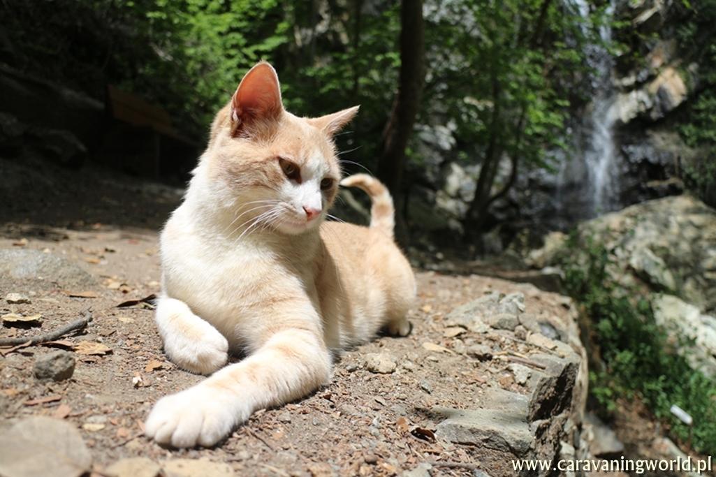 Wodospadu Kalidonia pilnują koty