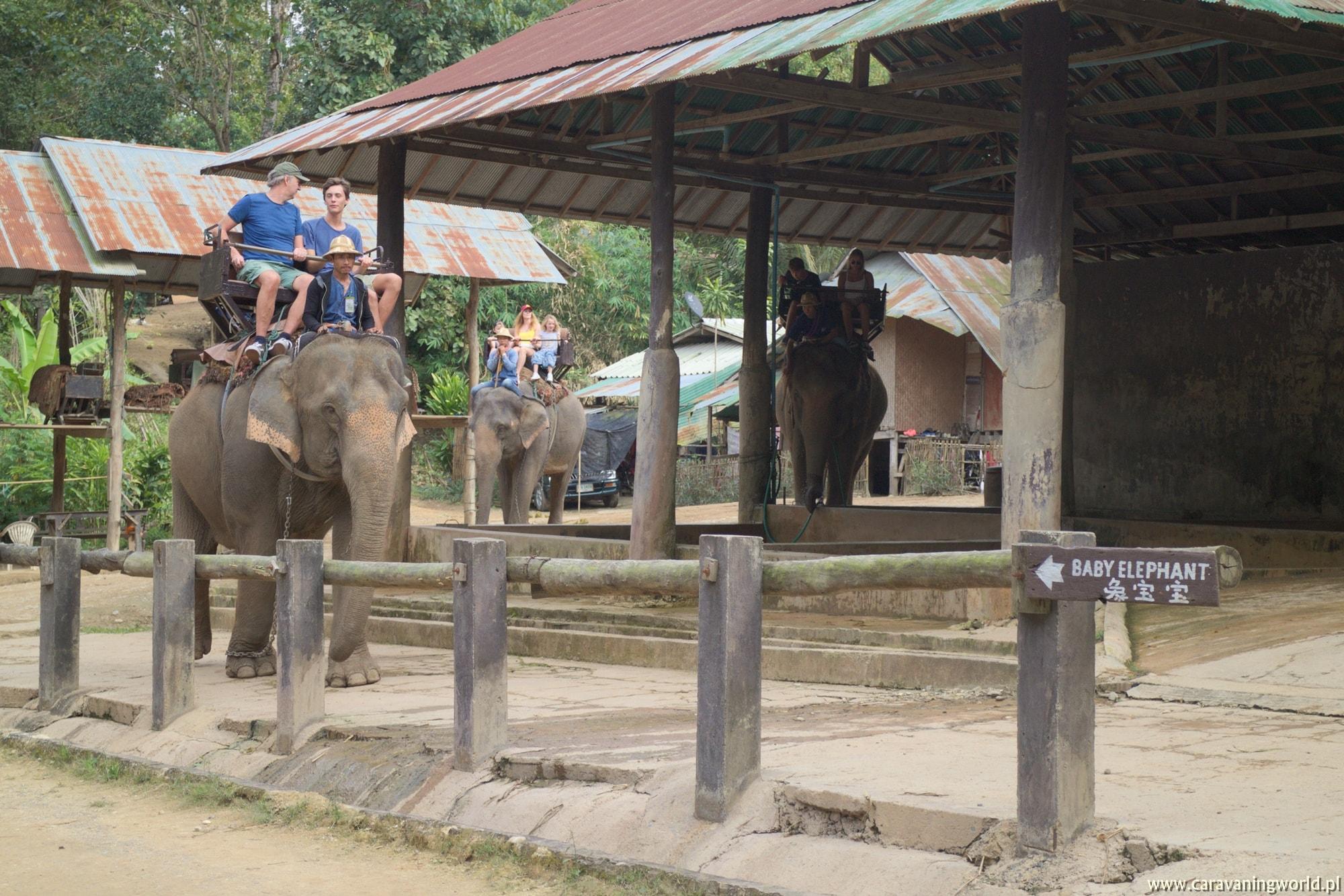 Jazda na słoniu jest niestety bardzo popularna