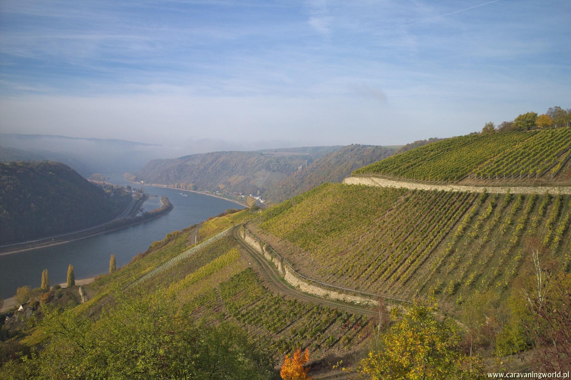 Winnice w okolicy szlaku Rabenacksteig